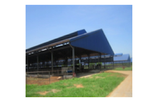 Vietnam Dairy Cow One-Member Co., Ltd: First GLOBALG.A.P. Certified Dairy Farm in Vietnam