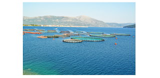 AGFOCERT Issues First GLOBALG.A.P. Aquaculture Version 5 Certificates in Turkey (Yapagili Cooperative) and Bosnia-Herzegovina (SLAP Ltd.)