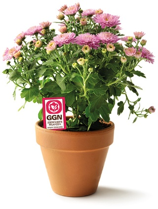 GLOBALG.A.P. Expanding Consumer Portal to Include Flower and Ornamental Plants