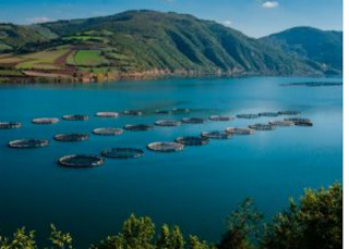 The Global Sustainable Seafood Initiative (GSSI) Recognizes The GLOBALG.A.P. Aquaculture Certification System