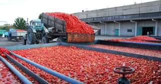 Revised Food Safety Programs & Auditing Protocol for the Fresh Tomato Supply Chain (Tomato Metrics) Published