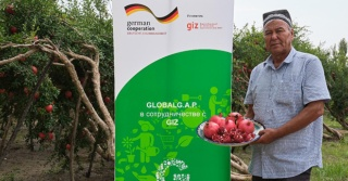 Cooperation and Certification bring Uzbekistan's Pomegranates to the World