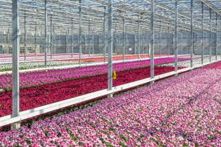 New GLOBALG.A.P. Add-on Offers More Choice to Floriculture Producers