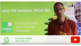 SAVE THE BANANA FROM TR4
