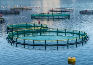 Increased Visibility for Certified Aquaculture