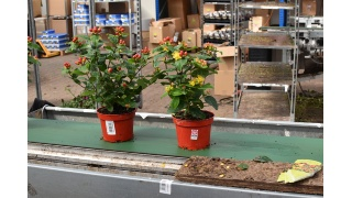 GGN Plants Launch with Landgard