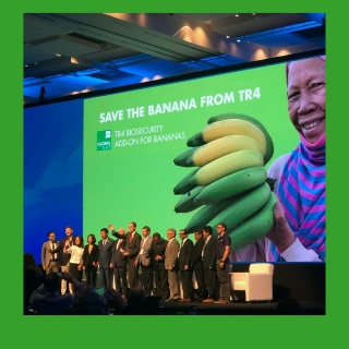 GLOBALG.A.P., World Banana Forum, and REWE Group Call to Action to Prevent the Destructive Spread of the Banana Pathogen TR4