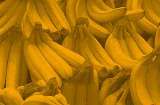 TR4 Biosecurity Bananas
